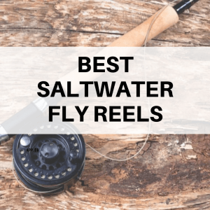 best saltwater fly fishing reel for the money