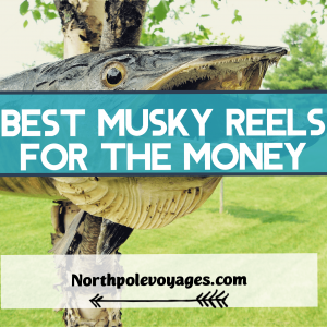 Best musky reels for the money