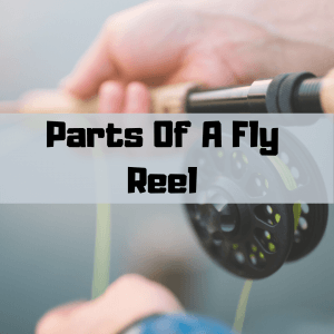 Parts of a Fly Reel