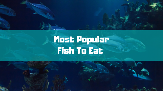 Most Popular Fish To Eat