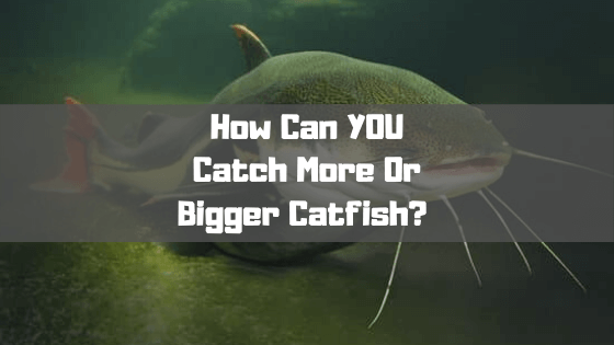 How Can YOU Catch More Or Bigger Catfish